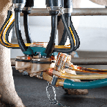 Automatic Milking Installation